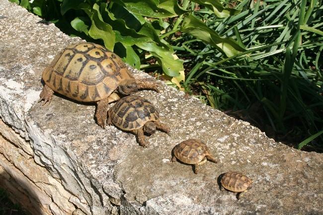 Mini Kühlschrank Für Schildkröten : Haben schildkröten zähne kroatien adriaforum