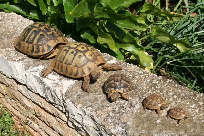 Kleiner Kühlschrank Für Schildkröten : Mini kühlschrank für schildkröten: kühlschrank im wandschrank. ist